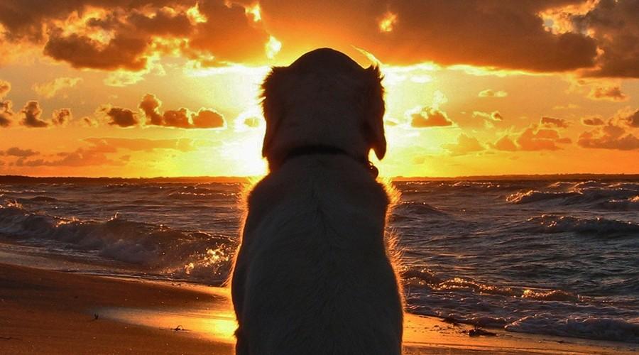 Playas para perros en la provincia de Málaga
